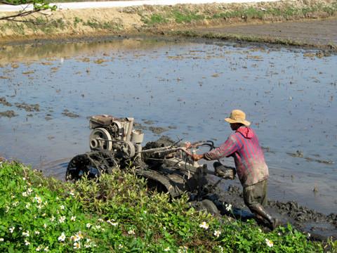 крестьянин во вьетнаме